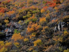 山庄秋景1