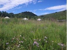 山花染草原